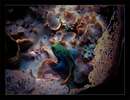Underwater colours